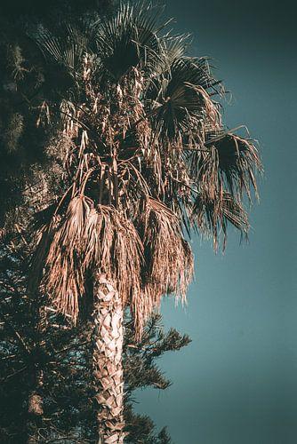 palmboom op een zomers eiland van Jonathan van Rijn