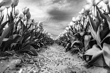 de dramatiek van een tulpenveld von Mike Bot PhotographS