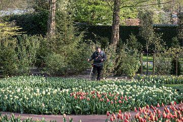 Tulpenvelden op de Keukenhof van Egon Zitter