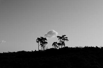 Kalmthoutse heide - Belgien von Maurice Weststrate