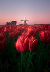 Typisch Nederlands uitzicht. von Dennis Werkman