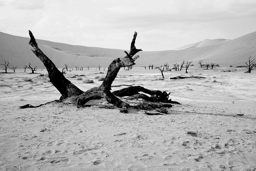 Deathvlei in Namibië van Jan van Reij