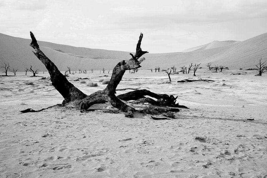 Deathvlei in Namibië