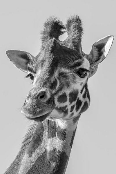 Portret van een  Giraffe in zwart wit van Marjolein van Middelkoop
