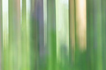 Impressie van rododendron bos van Karla Leeftink