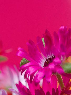 Fleur VII - Blumen - Blumen von Herma Egberts