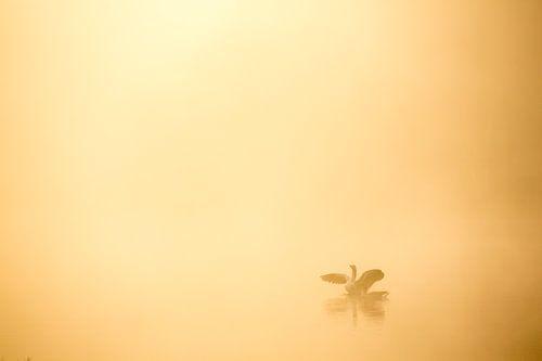 Ganzen in de mist -  Makkumerplas, Drenthe, The Netherlands