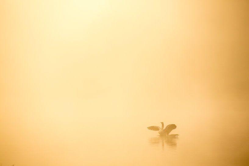 Ganzen in de mist -  Makkumerplas, Drenthe, The Netherlands van Bas Meelker