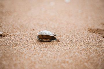 Muschel von Fotoverliebt - Julia Schiffers