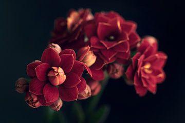 Kalanchoë bloem van Bianca Jansen Fotografie