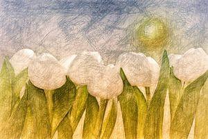 weiße Tulpen van