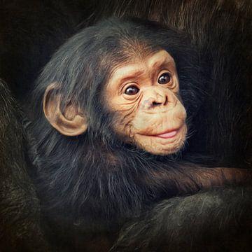 Kleiner Schimpanse van Angela Dölling