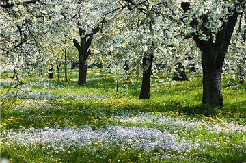 hoogstamboomgaard van George Burggraaff