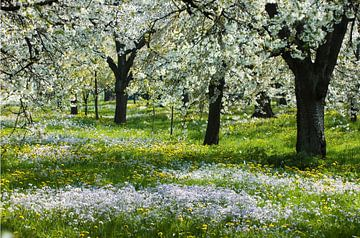 hoogstamboomgaard von George Burggraaff