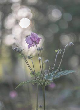 Blumen Teil 176