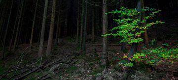 Donker bos, groen accent van