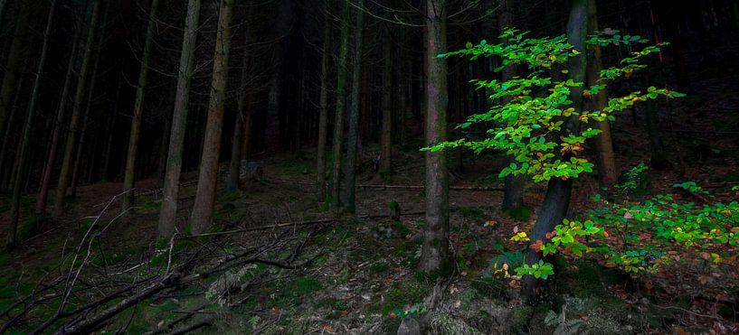 Donker bos, groen accent van Peter Bolman