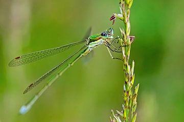Libelle in groentinten van Roosmarijn Bruijns
