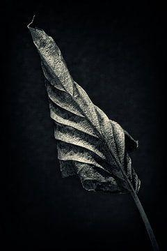 Herbstblatt von Halma Fotografie