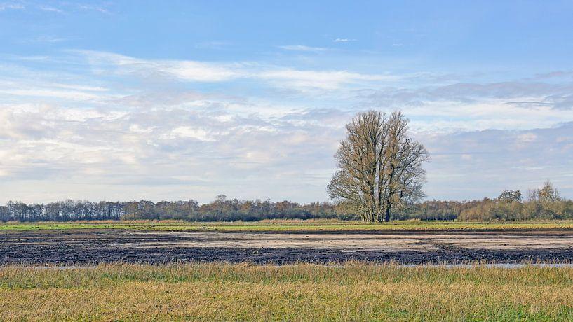 Eenzame boom in het veen van Ronald Smits