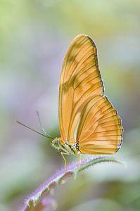 Vlinder in pastel van Marleen Baas