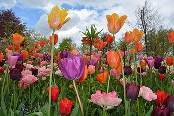 Tulpen van Anita van der Wiel