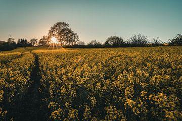 Zonsondergang over het verkrachtingsveld van Steffen Peters
