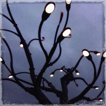 Lighttree sur Kuba Bartyński