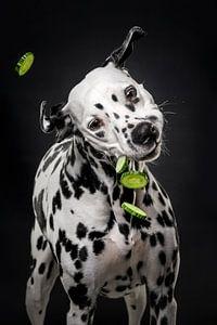 Hund mit Gurke 3/3 von Lotte van Alderen