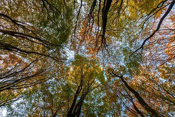 Résumé de l'arbre sur Albert Mendelewski