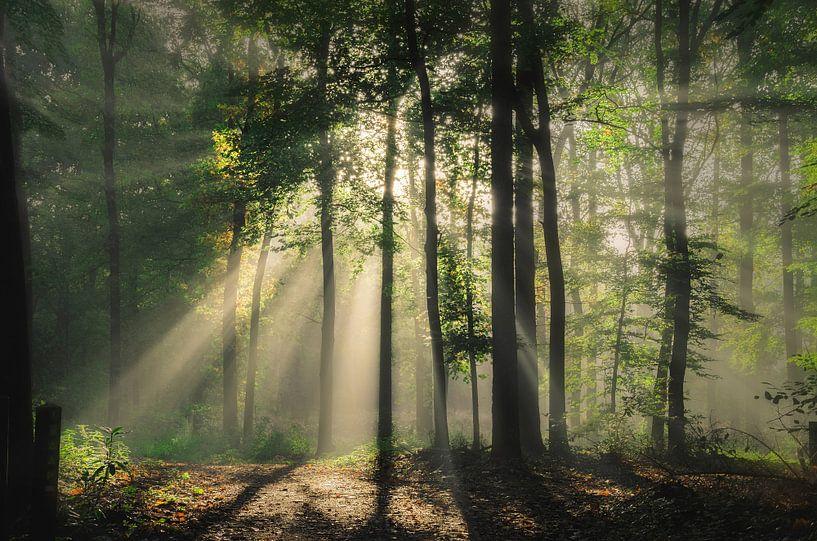Overwhelmed in spring van Rob Visser