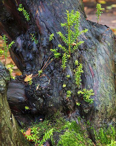 Jonge scheuten op boom