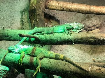 Duo-Reptilien von tania mol