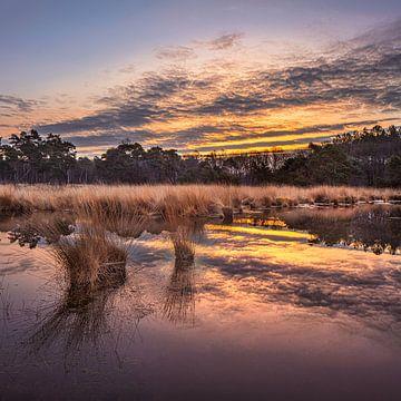 Zonsopgang met dramatische wolken weerspiegeld in een rustige wetland 3 van Tony Vingerhoets