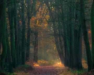 Zonnestralen in het bos van Miranda Rijnen