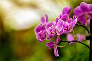 Orchidee von Jan van Broekhoven
