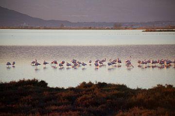 flamingo van marijke servaes