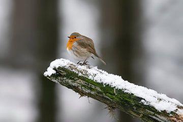 Rotkehlchen im Schnee auf einem Ast. von Albert Beukhof