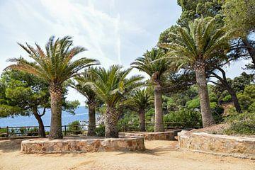 Palmbomen in Spanje van Maria-Maaike Dijkstra