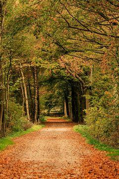 Boslaan in herfstkleuren von Hans Oudshoorn