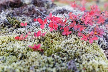 Herfst kleuren van John Groen