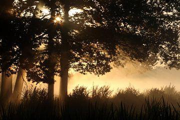 Sonnenaufgang mit Bäumen von Jana Behr