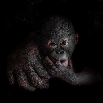 Das süße kleine Orang-Utan-Affenjunge schaut ernst, Mutterhand. von Michael Semenov