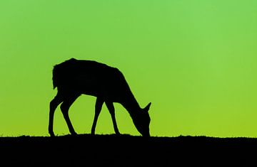 Groen en Zwart von Martijn van Dellen