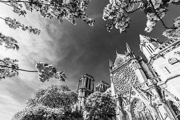 Notre-Dame de Paris im Frühling / Schwarzweiss von Werner Dieterich