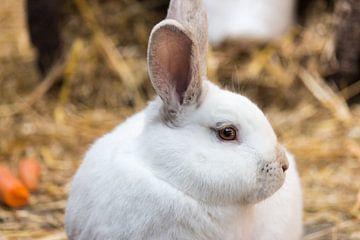 Kaninchen van Jürgen Döring