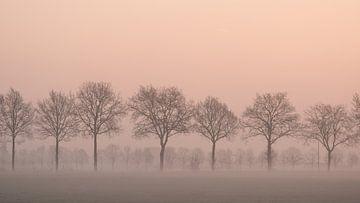 Baumreihe von Elles Rijsdijk