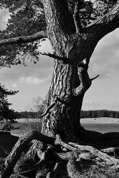 Ein Stamm in Schwarz-Weiß von Gerard de Zwaan
