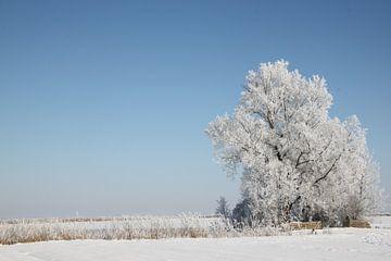 Bomen in de winter van Ruud Wijnands