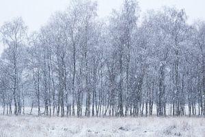 Sneeuwige Dag van Vince Pellegrom